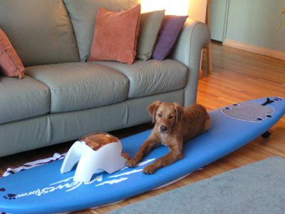 Teach your dog to surf exercises