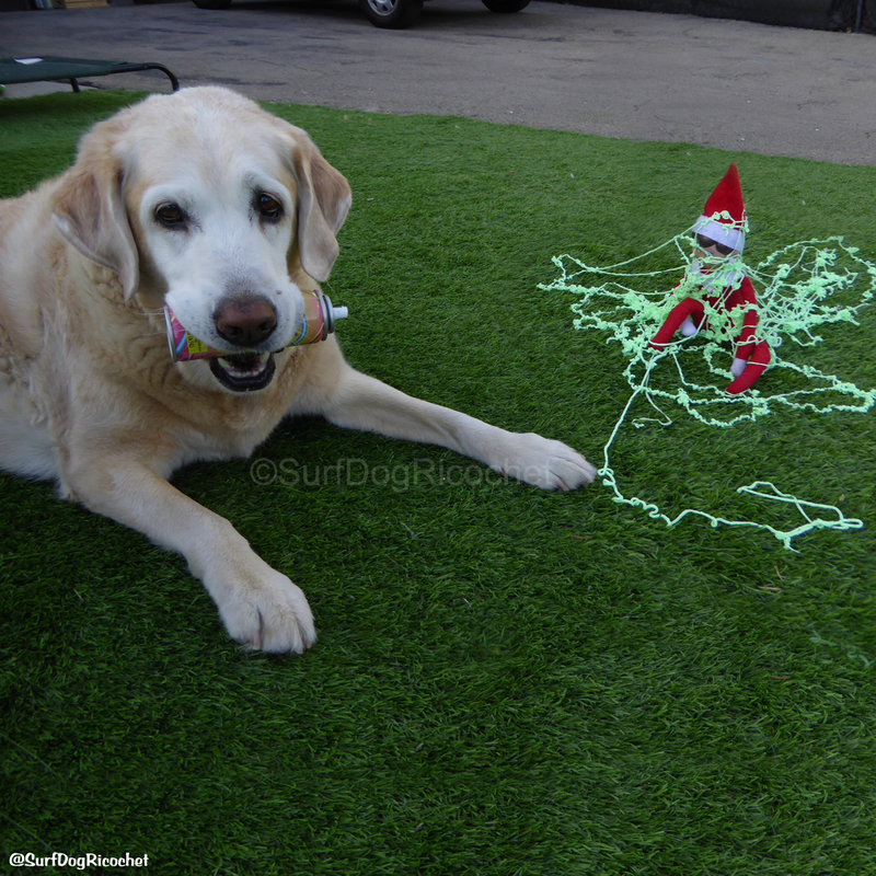 elf on the shelf dogs silly string