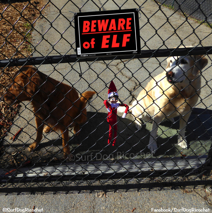 Elf on the shelf surf dog