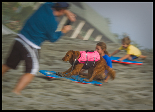 dogs surfing with kids