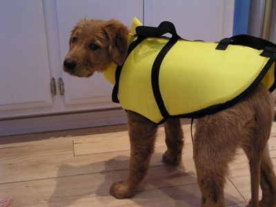 surf dog wear life jacket for so cal surf dogs