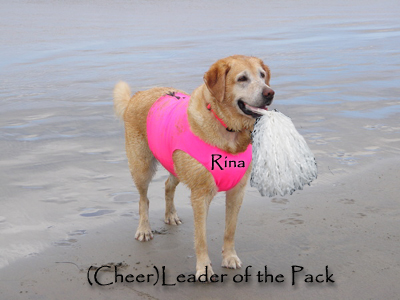 surf dog cheerleaders