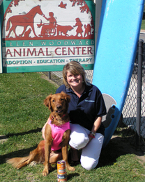 surf dog Ricochet wins helen woodward animal center surf dog surf a thon