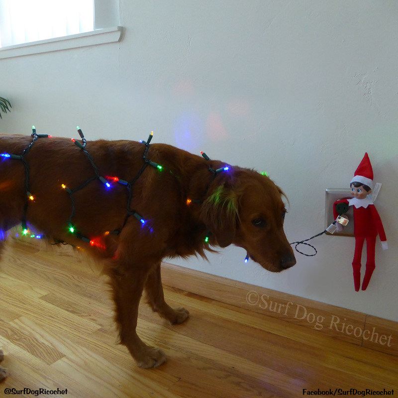 people magazine elf on the shelf dogs