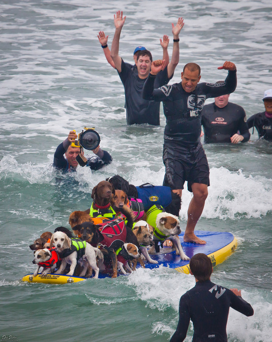 so cal surf dogs most dogs on a surfboard