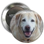 surf dogs button