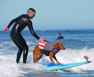 Surf dog with veteran
