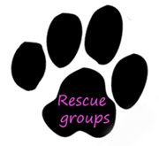 surf dog ricochet lists rescues