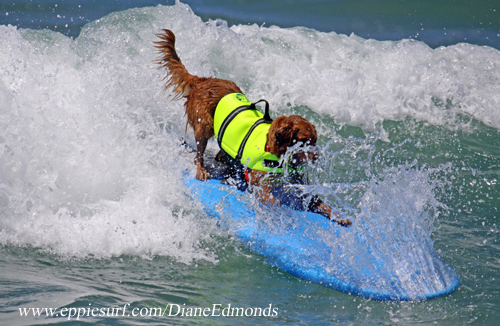 surf dogs wipeout
