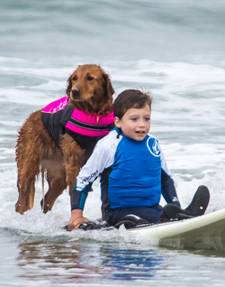 dog surfing with disabled boy