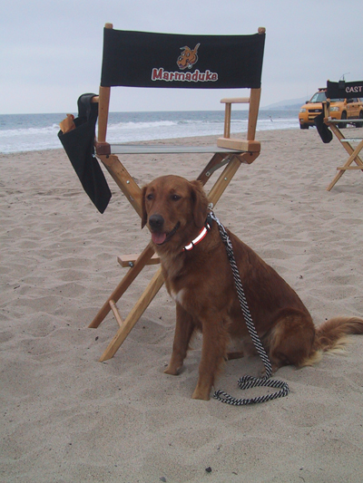 Surf dog Ricochet on Marmaduke set