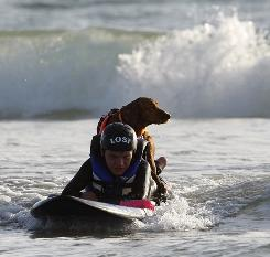 surf dog wins pet hero award