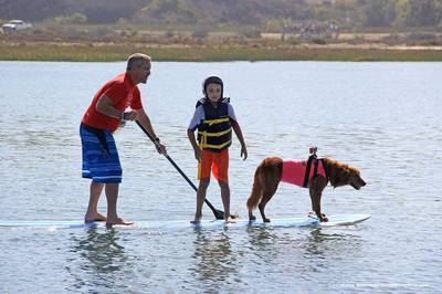 Surf dog stand up paddling