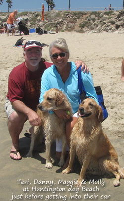 golden retrievers at beach