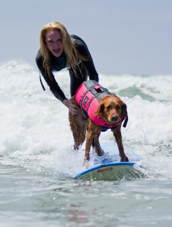 surf dog adaptive surfer