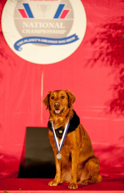 Surf dog AKC awards