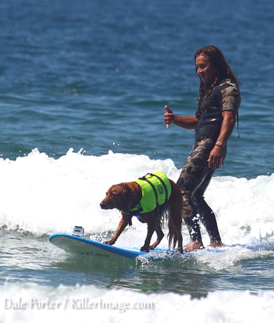 dog surfing 2