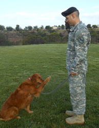 Surf Dog Ricochet saluting soldier