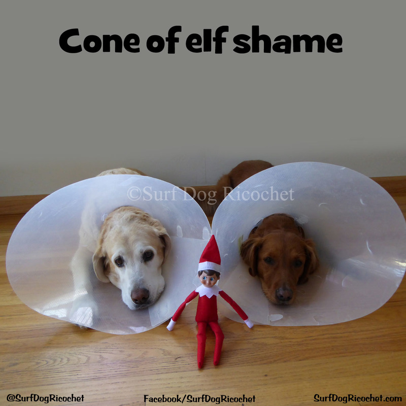 dogs cone elf on the shelf