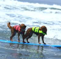 dog surfing is fun