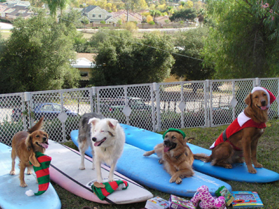 Getting ready for the World Dog surfing championships