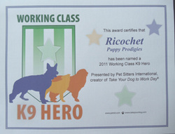 surf dogs get K9 hero award