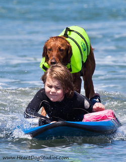 surf dog surfs with special needs