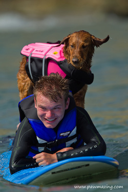 surfice dog surf dog surfing