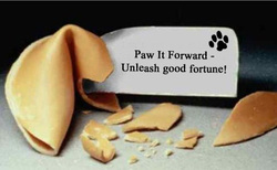 surf dog paw it forward campaign