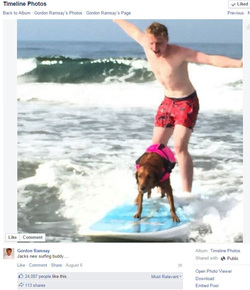 Gordon Ramsey Surf Dog
