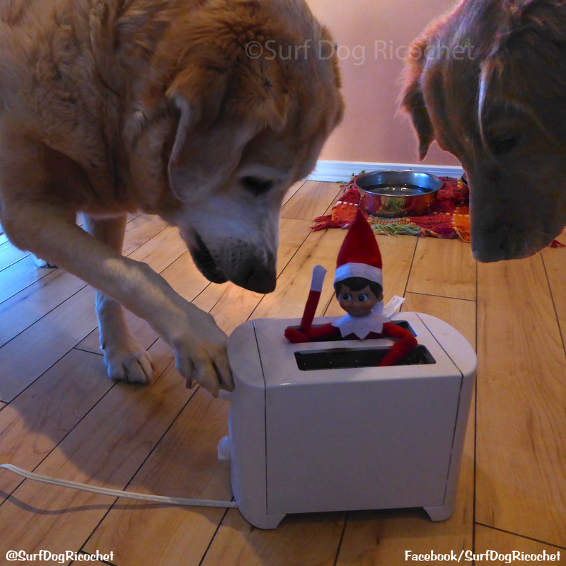 Dogs Elf on the Shelf