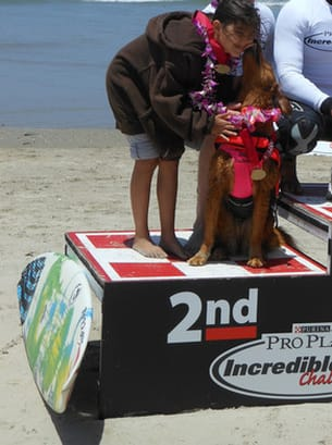 dog surfing and competition
