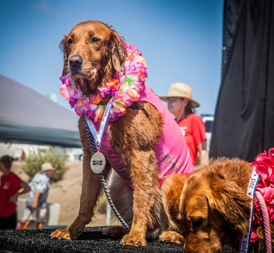 surf dogs competition winner
