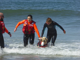 water rescue dog 11