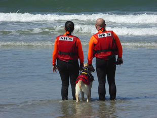 water rescue dog 9