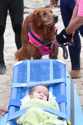 surf therapy dogs