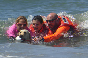 Surf Dog Ricochet - Water rescue