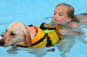 Surf dog Ricochet - Therapy dog