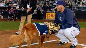 Surf dog throws first pitch