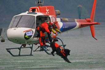 dog jumps out of helicopter