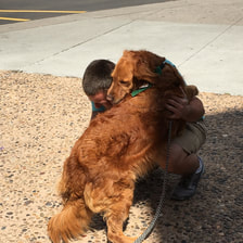 therapy dogs for ptsd