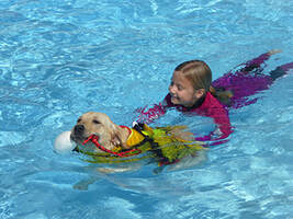 Dog swimming with child