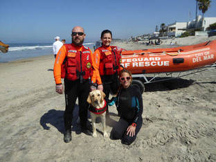 water rescue dog 8