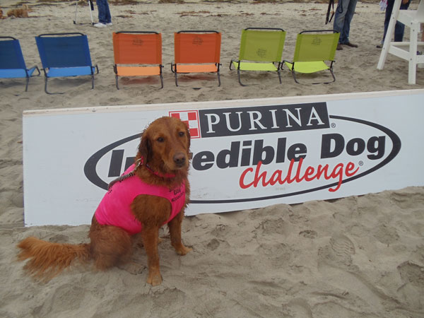 Purina Pro Plan surf dog
