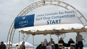 Surf Dog Competition loews