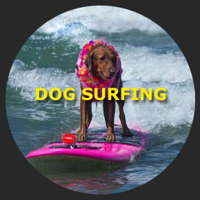 Surfing dogs Ricochet 1