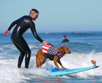 Surf dog veterans with PTSD