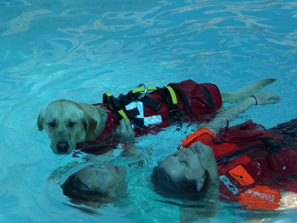 water rescue dog 6
