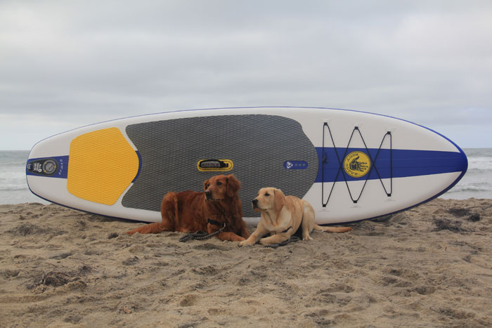 stand up paddle with your dog